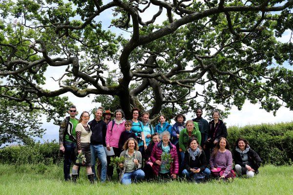 group-wiggly-oak