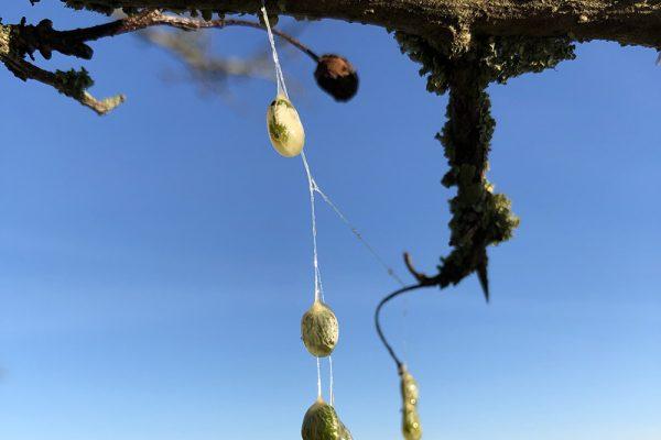 eggs-in-tree-tree-walks-glastonbury