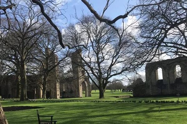 abbey-tree-id-workshop