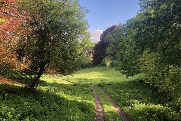 bushy-coombe-glastonbury-meadow