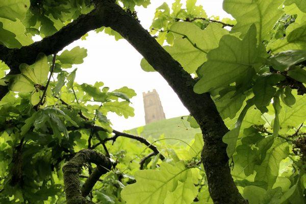 glastonbury-tor-oak