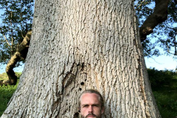 great-white-ash-glastonbury-trees-matt-witt-3