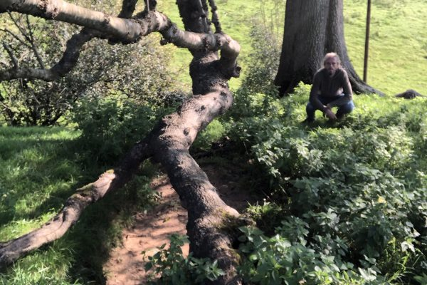 great-white-ash-glastonbury-trees-matt-witt6