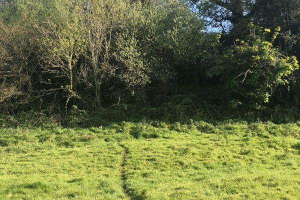 badger-trail