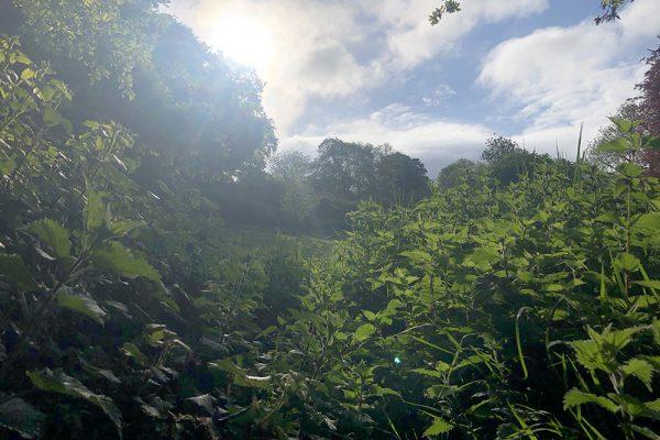 paths-bushy-coombe-glastonbury