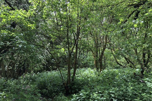 woods-green-glastonbury-tor