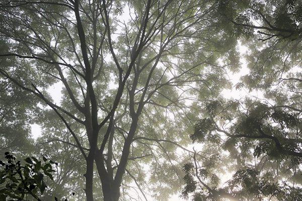 ash-mist