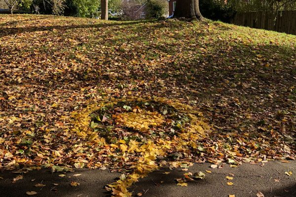 Norway Maple Mandala with Glastonbury Tor